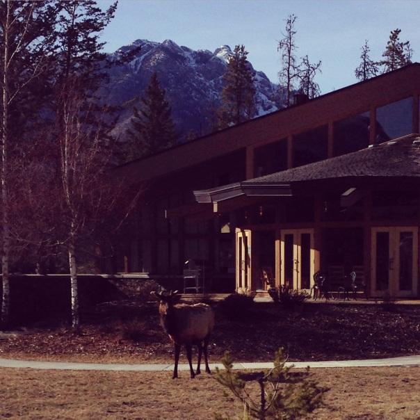 Banff 4